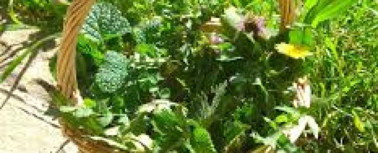 VI ed. Festa delle erbe! 28 aprile Pieve Tesino